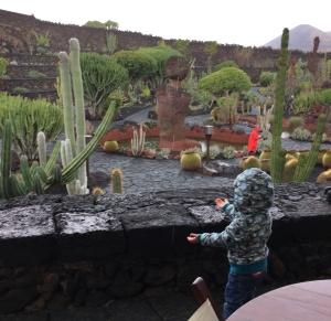 Ein Kind steht auf der Anhöhe des Cafés im Jardin de Cactus und hält die Hände gen Himmel, da es regnet. Im Hintergrund ist der Park mit seiner Vielfalt an Kakteen zu sehen.
