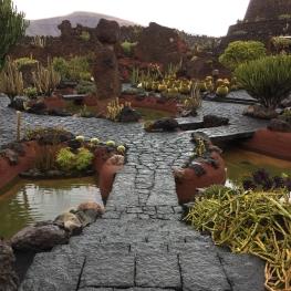 Das Bild zeigt einen Steinweg durch den Park Jardin de Cactus auf Lanzarote. Der Weg führt über einen kleinen Teich und überall stehen viele verschiedene Kakteen.