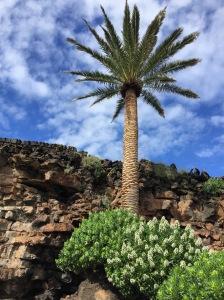 Eine Palme wird von unten gegen den blauen Himmel fotografiert.