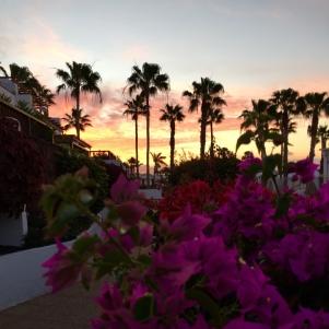 Schattenhaft stehen eine Reihe Palmen vor einem Sonnenuntergang auf Lanzarote. Im Vordergrund steht ein pinken Blumenbusch.