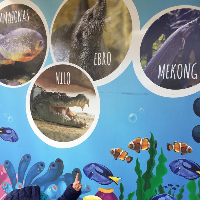 Das Bild zeigt vier runde Bilder von einem Fisch, einem Biber, einem Krokodil und einem Aal. Der Zeigefinger eines Kindes zeigt auf die Bilderwand.